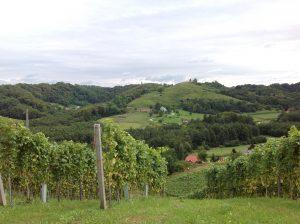 Vinyard near Ormoz